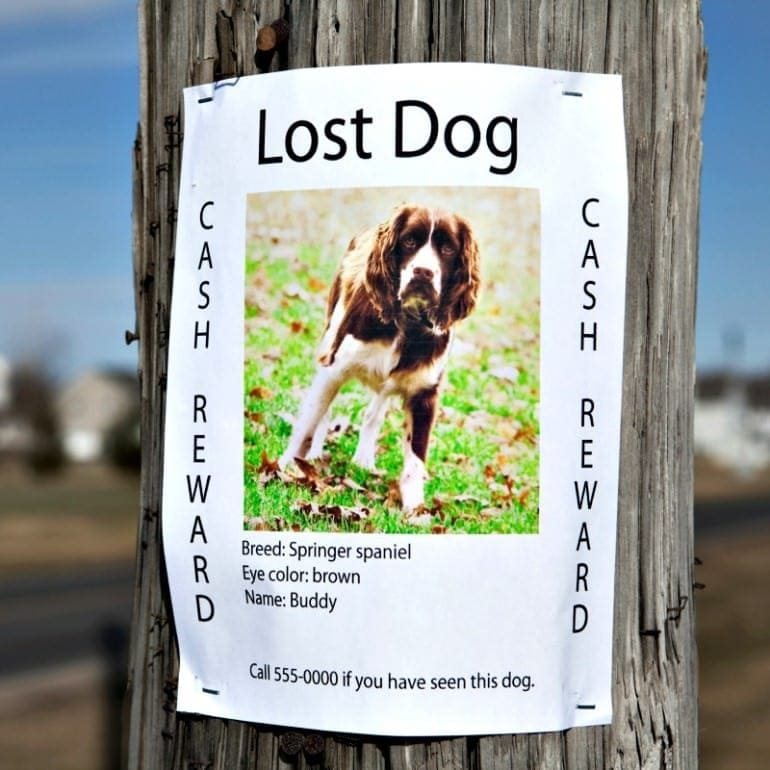 New scam has been targeting owners of lost dogs - Sports Retriever